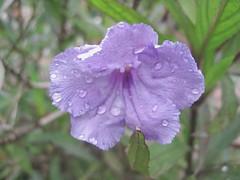 Flora - Posada El Encanto