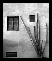 salirò (ozio-bao) Tags: cactus biancoenero artlibre flickrchallengewinner oziobao
