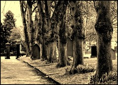In Line (andrewlee1967) Tags: uk trees england blackandwhite bw monochrome cemetery landscape mono yorkshire marsden andrewlee abigfave canon400d andrewlee1967 anawesomeshot flickrdiamond andylee1967 focusman5