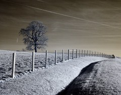how long (zachstern) Tags: trees wallpaper usa landscape ir arbol bravo tr maryland boom rbol infrared  albero tre puu arbre rvore strom baum trd  infravermelho r72 copac infrarot  mytree  drzewo   stablo infrarrojos   infrapuna infrarood infrarouge  flickrsbest infrarossi  abigfave perfectangle artlibre  anawesomeshot colorphotoaward superbmasterpiece f717ir  inframerah     infravrs infraerven