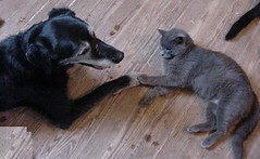 Senior cat and dog hold paws