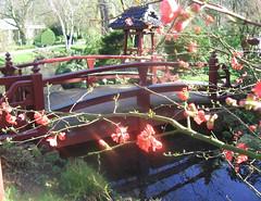 Leverkusen (Ronile35) Tags: bridge spring brücke frühling japanischergarten leverkusen favoritegarden