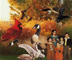 Kingdom of the Birds (n