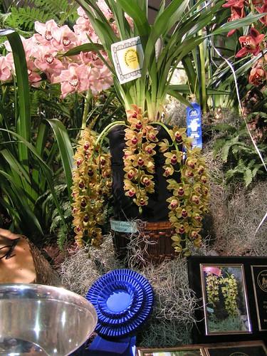 orchids17