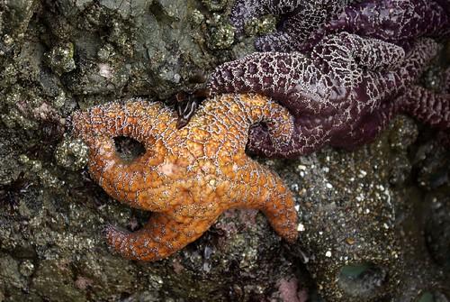 Starfish & Anemones