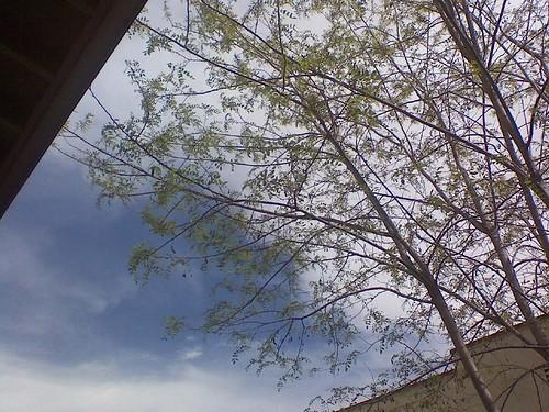 ah  blue skies