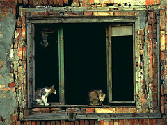 Abandoned (Aleksandra Radonic) Tags: cats building texture abandoned window colors wall cat vampire decay serbia photojournalism documentary social surprised past windowframe burned streetshot oldwall likeapainting firstthought impressedbeauty whylookingatme