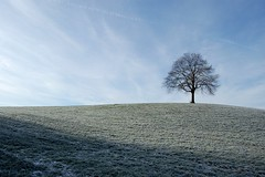 one tree (Toni_V) Tags: sky cold tree nature topv111 d50 europe frost zurich 2006 minimalism baum lonelytree balderen albis lonesometree toniv 122806 superhearts toniv