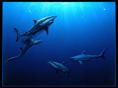 shark cretaceous jaws