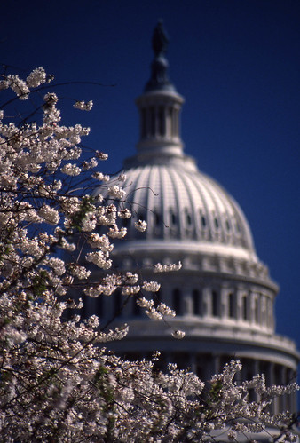 Capitol and Cherry Blossom 2