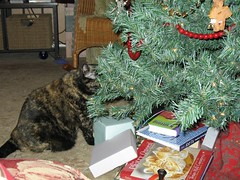 Harley Under the Christmas Tree
