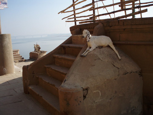 A goat having good time in the shadow