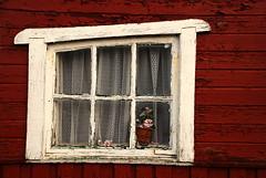 Even plastic flowers fade (Olfert) Tags: red flower window malm fiskehoddorna nikonafsdx181353556gifed