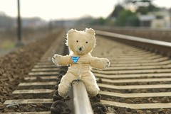 brave Pooh Bear rescues puppy... by stopping the train! - by d_oracle