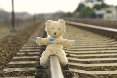Bear stops train
