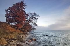 On Coast Of The Milky Sea (Dietrich Bojko Photographie) Tags: morning autumn seascape nature tag3 d50 germany landscape bravo tag2 mood tag1 searchthebest webinteger nikond50 rügen ruegen circularpolarizer deutschalnd tagout specnature cokinp121m cokinp164 wreechen meklenburgvorpommern gnd4