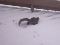 ...the squirrel is scampering...