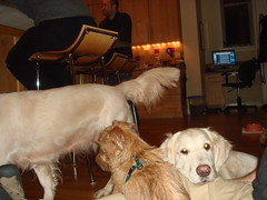 Sailor Varla and Frisket