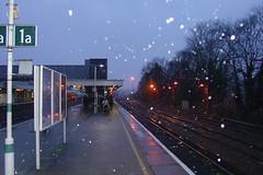 Snow #2
