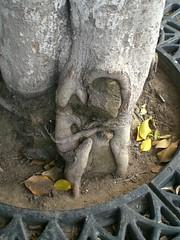 Hugging root homunculus ((or something)