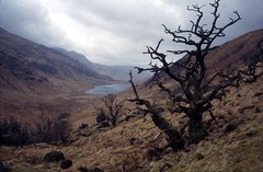 A desolate place (John of Wirral) Tags: tree scotland glen knoydart scottishhighlands