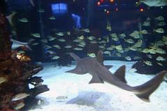 Aquarium Restraunt