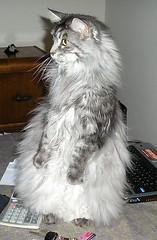 Gilda doing her best Meerkat imitation - by taelcat