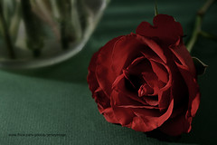Roses are Red ... (jerseyimage) Tags: red wallpaper flower green rose canon dark lowlight jersey vase dslr dim channelislands sthelier subdued manualmode 400d jerseyimage