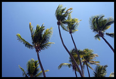 Palm Trees at Club Med, Hienghene (NickAA) Tags: cruise sky beach water island palm newcaledonia clubmed hienghene