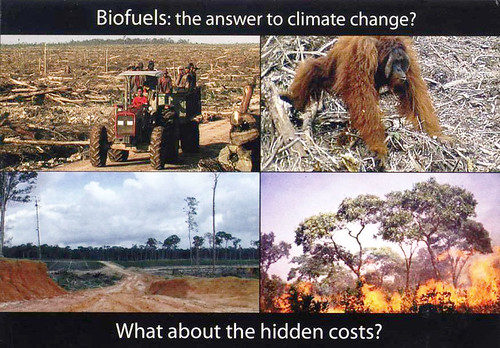 Biofuels postcard for MEPs (Europe)