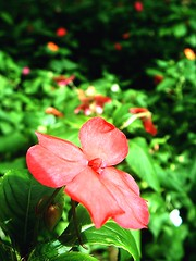Red flower (L.Lukatsky) Tags: light red sun flower color green colors garden spring focus