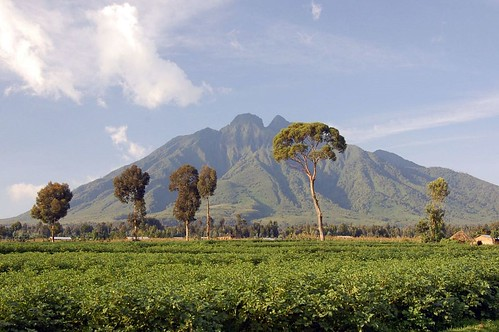 Virunga Mountains - 2