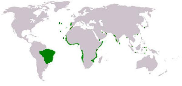 Map of the Portuguese empire at its height