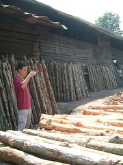 BBQ RED TREE (Westen mit der Nacht) Tags: sun tree port king charcoal malaysia trunk coal sonne matang perak stamm   kualasepetang bumen     carryfei  portweld