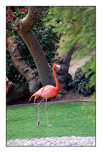 seaworld flamingo