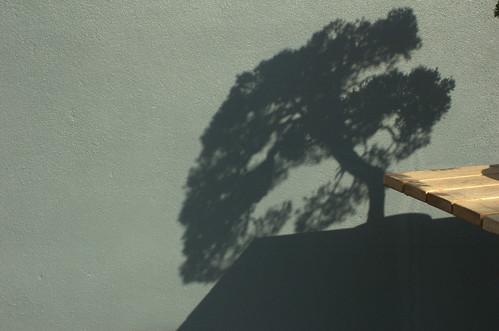 Shadow and Light, Bonsai Museum, BBG