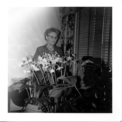 image_01_802 (bellhalla) Tags: flowers plants square texas unitedstates katie leon 1950s prints 20thcentury geotag orientation sizes seguin processor familymembers amazonlily 8431 photospecs stockcategories 602ecourt 3x3 bateyfamily filmcodes flickrmaintenance