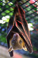 Fruit Bat by Spike