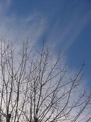 árbol araña cielo