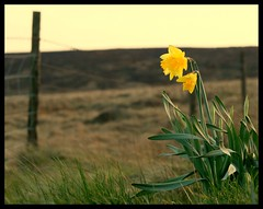 (andrewlee1967) Tags: uk england flower landscape bravo searchthebest lancashire lowangle saddleworthmoor andrewlee canon400d andrewlee1967 andylee1967 focusman5