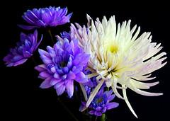 A Mixed Bunch (Vanda's Pictures) Tags: flowers petal vanda excellence blueribbonwinner fantasticflowers splendiferous lovephotography superbmasterpiece wowiekazowie