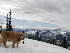 Mt. Rainier makes an appearance (as seen from false summit)