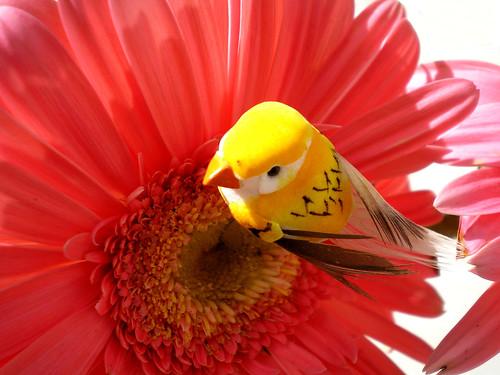 amarelo   yellow
