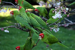Many parrots, no pirates - by gwen