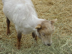Sheepy 018