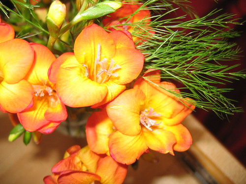 Freesias still flowering