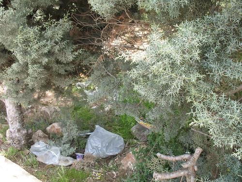 garbage garden1
