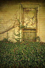 The Last Days of Worthington (deatonstreet) Tags: door old color detail green abandoned nature overgrown leaves vines kentucky ivy front louisville suburbanality