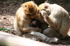 View Monkeys on Flickr