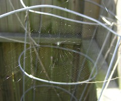 Spiderweb (spike55151) Tags: yards yard spider backyard spiders web spiderweb silk backyards spiderwebs webs snare spidersilk spidersilks
